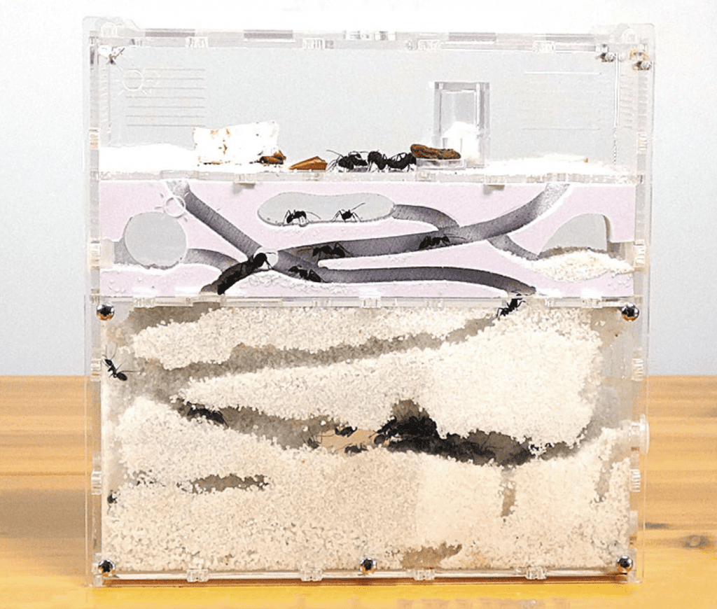 Image of an ant formicarium